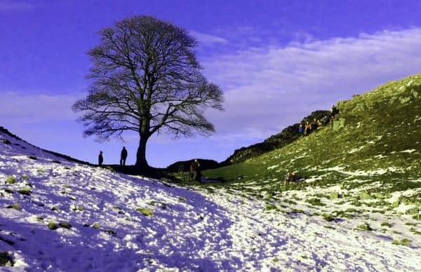Sycamore Gap by Hadrian's Wall